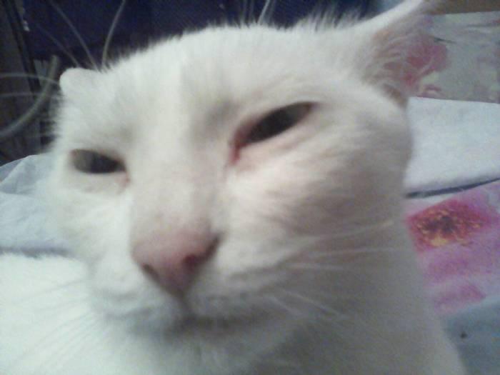 Утро понедельника Кот, Глухота, Белый