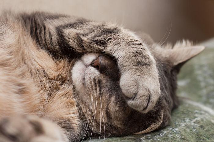 Кошки умеют реагировать на свое имя. Кот, Риа Новости, Длиннопост