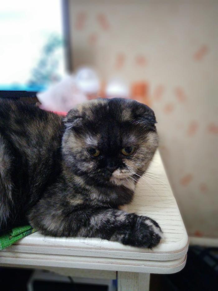К волне про кошаков Трехцветная кошка, Длиннопост, Кот, Реальная история из жизни