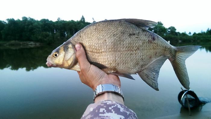 Кого чаще всего ловят рыболовы Рыбак, Рыболовство, Длиннопост