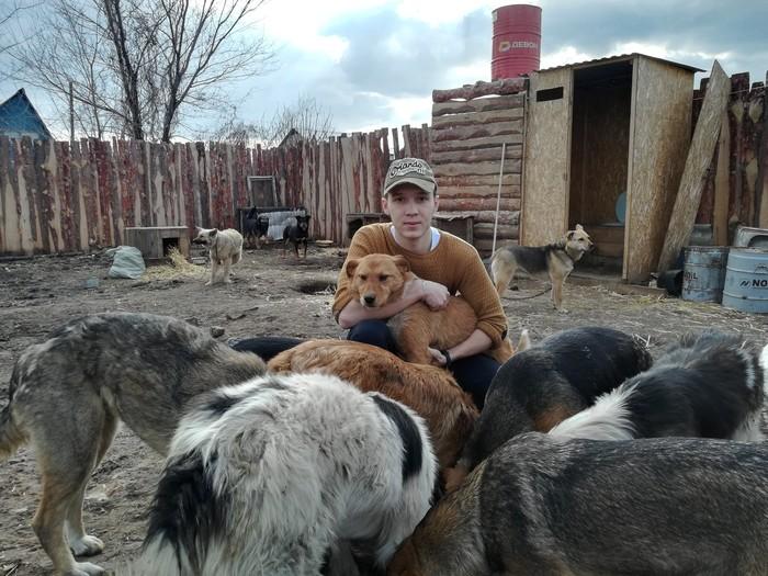 Чистомэны в Приюте для собак. Чистомен, Оренбург, Животные, Помощь, Приют для животных, Длиннопост