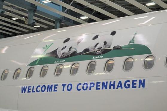 Двух панд спецрейсом доставили из Китая в Копенгаген. Для Дании это событие государственного масштаба. Дания, Копенгаген, Китай, Панда, Зоопарк, Аренда, Милота, Позитив, Длиннопост