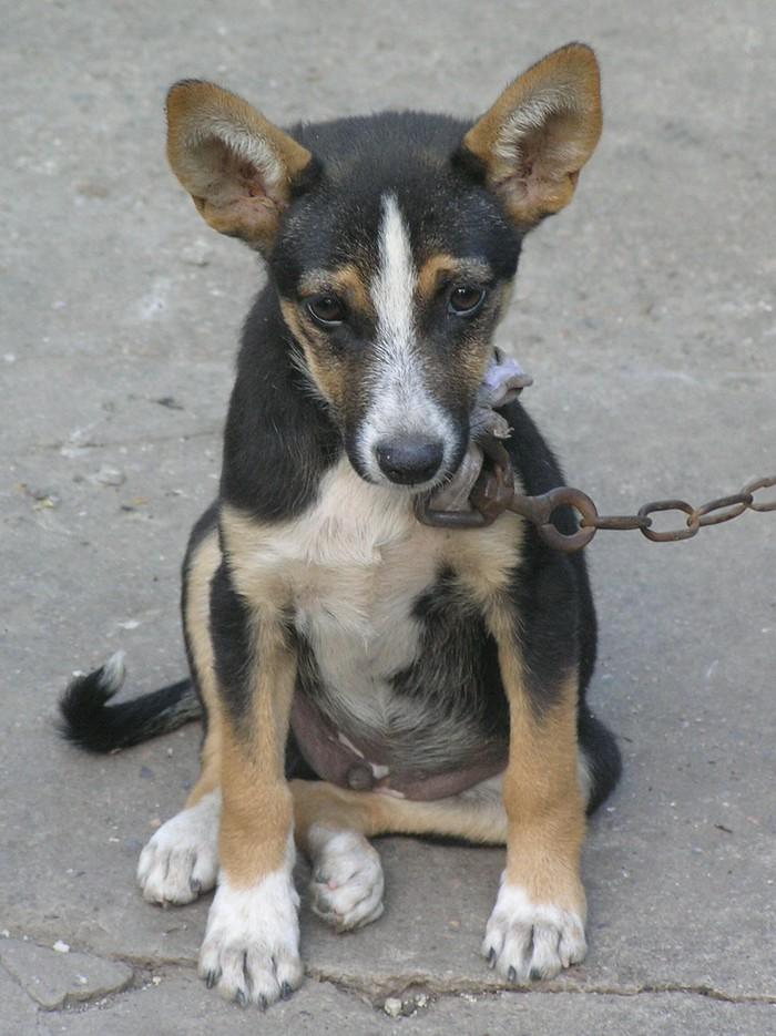 Собака в деревне Собака, Деревня, Коза, Кот, Длиннопост, Жизнь в деревне
