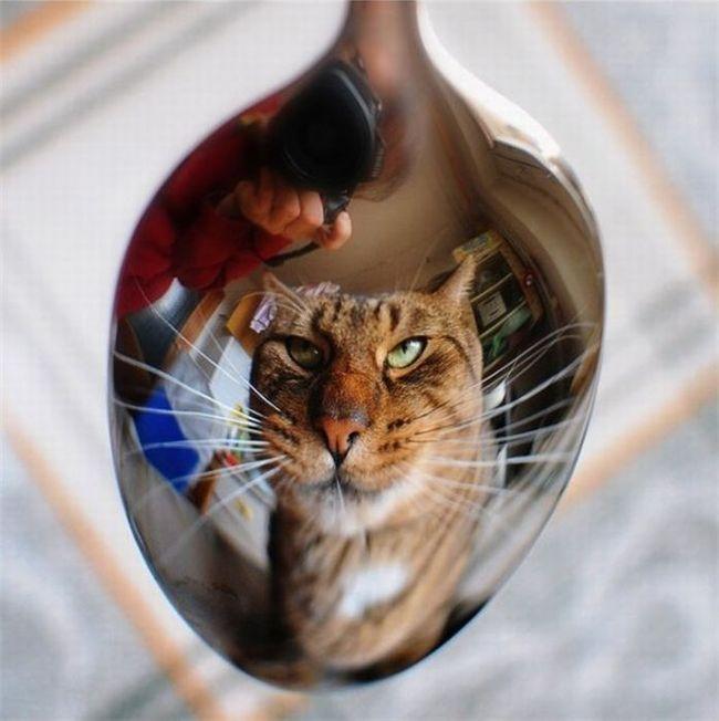 Кошка в ложке Баян, Кот, Фотография, Животные, Длиннопост, Отражение