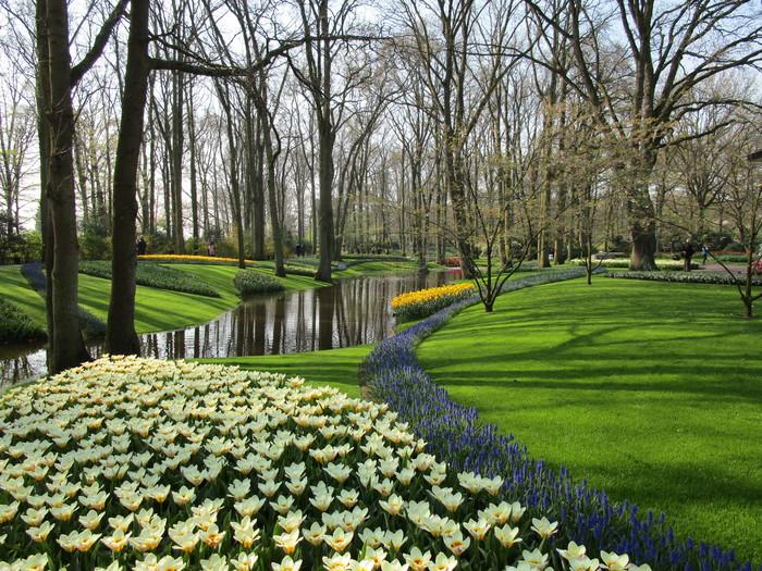 Немного весны из самого большого парка тюльпанов (много фото) Цветы, Тюльпаны, Длиннопост, Голландия, Парк, Красивое