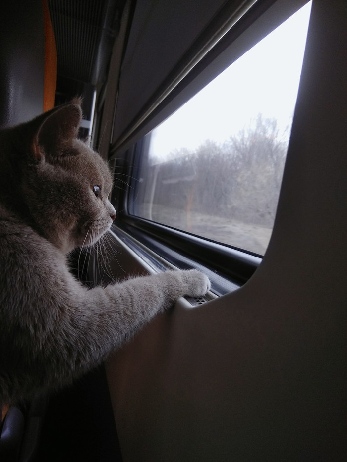 Путешествие Кот, Поезд, Дорога домой, Длиннопост