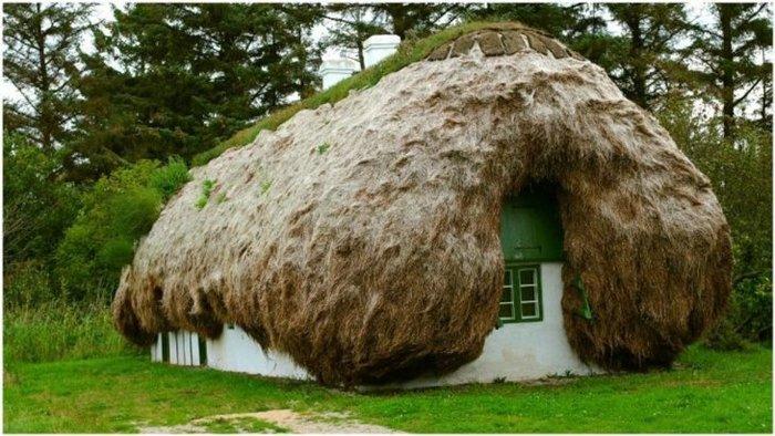 Крыша из морских водорослей Крыша, Дом, Водоросли, Дания, Длиннопост