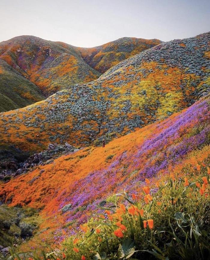 Цветущая Калифорния
