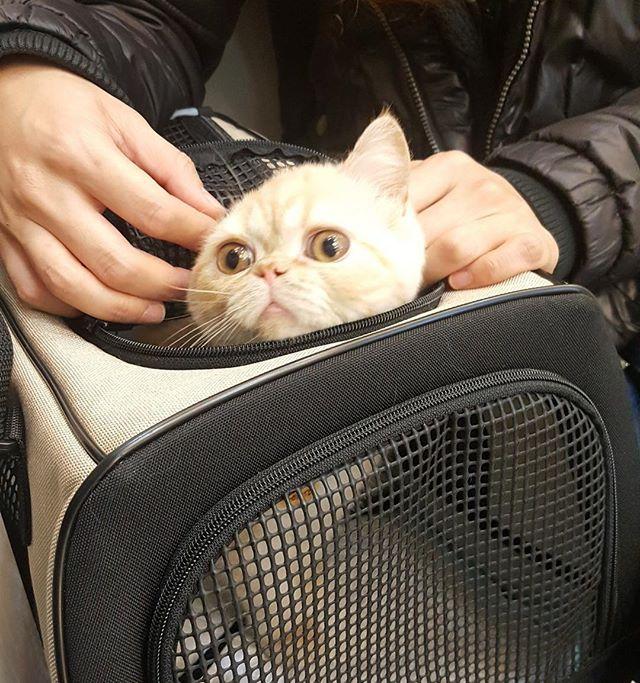 Всмысле к ветеринару?
