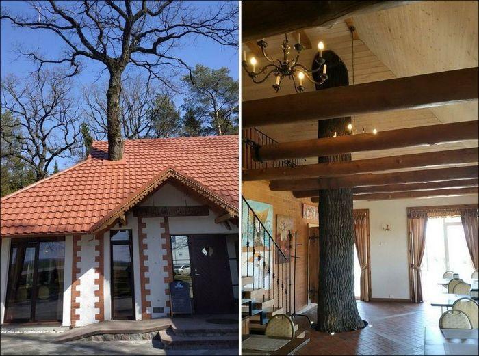 Дерево и Дом