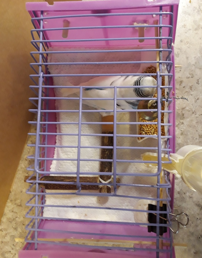 Клетка для волнистого попугая-инвалида Самоделки, Домашние животные, Помощь животным, Своими руками, Попугай, Птицы, Инвалид, Длиннопост