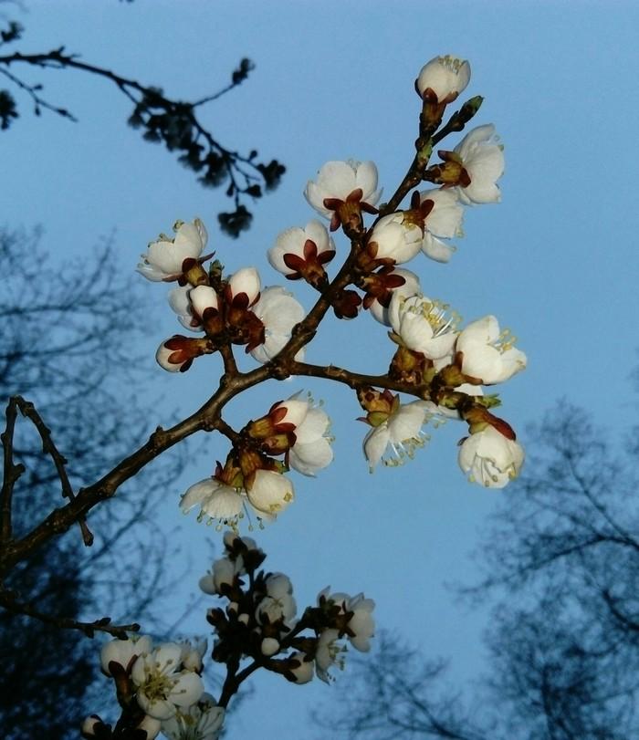 Природа Весна на заречной улице, Природа России, Красота природы