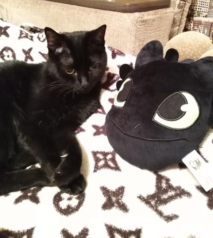 Кошка - Бэтмен Кот, Домашние животные, Супергерои, Длиннопост