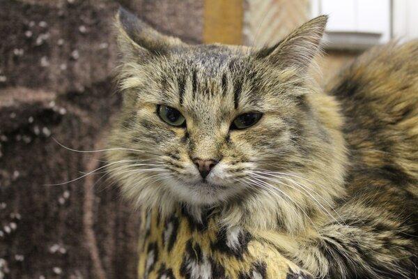 Что умеют котики? Кот, Котоистории, Красноярск, Котокафе