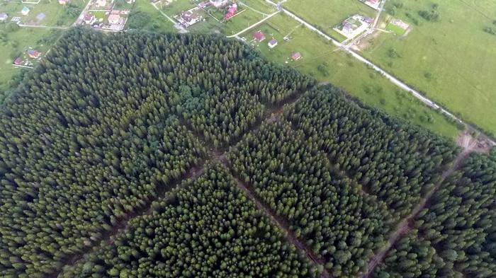 История про то, как череповчане лес спасают от чиновников. Длиннопост, Лес, Череповец, Важно, Чиновники, Негатив