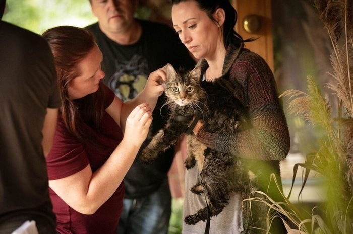 Котики покоряют Голивуд Кладбище домашних животных, Голивуда, Длиннопост, Кот, Животные
