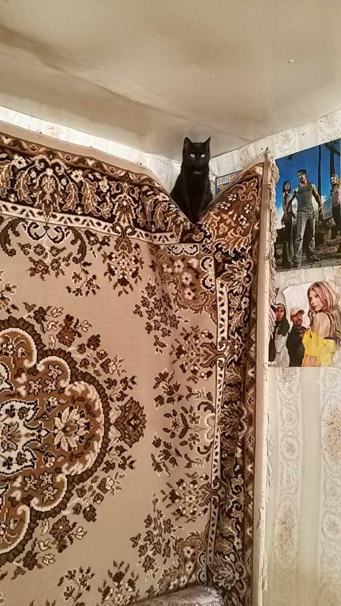 Кот Кот, Ковер, Потолок