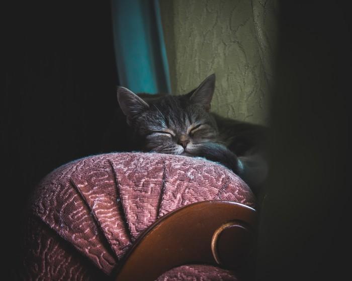 Британский пушистик Кот, Кот Британии, Пушистый, Фотография, Начинающий фотограф, Длиннопост