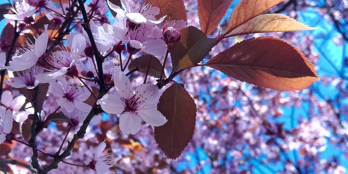 Весна Весна, Фотография, Макро, Польша