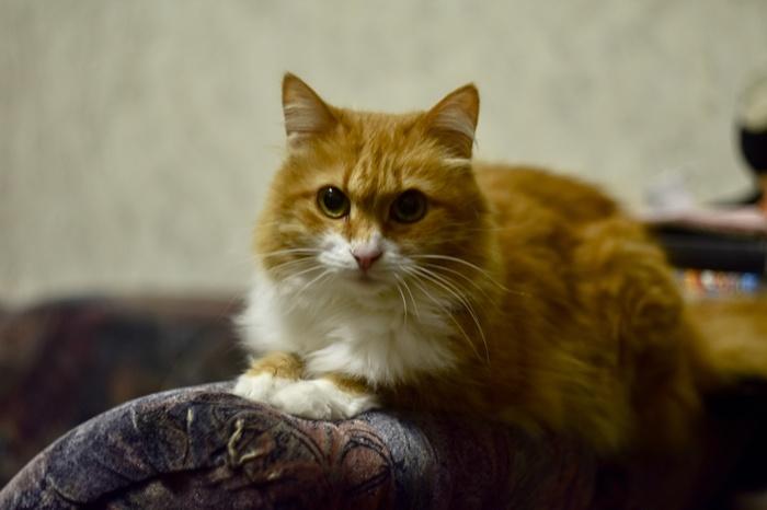 Фотогеничность уровень кот