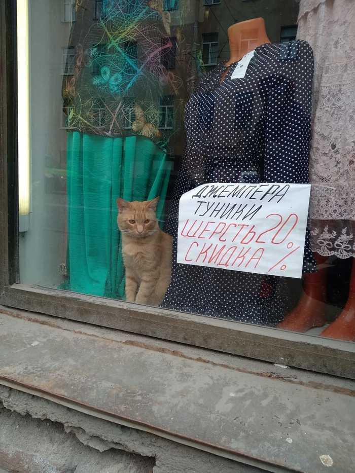 Котик сделал мой день Кот, Витрина, Надпись