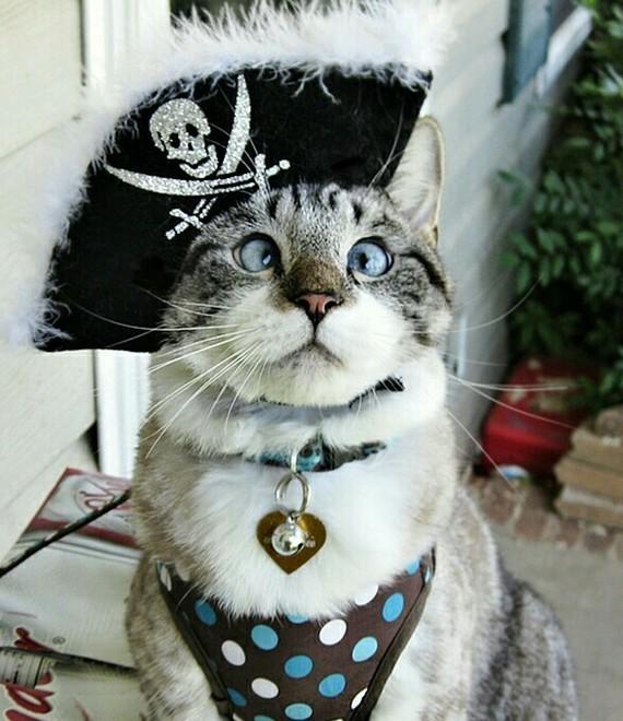 Ищу игру, квест, а может и не квест Ищу игру, Квест, Мои нулевые, Кот