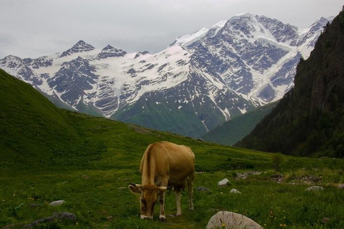 Эльбрус и Приэльбрусье. Фотоплёнка одного похода. Фотография, Горы, Эльбрус, Поход, Природа, Длиннопост