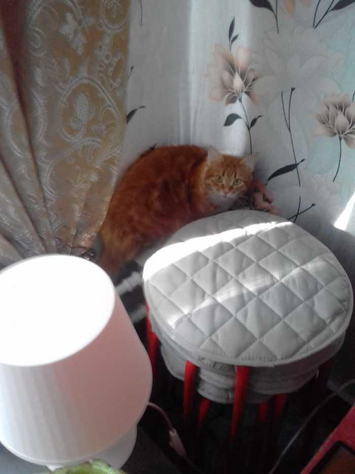 Ловите кошечку=) Маруся, Кот, Рыжие, Длиннопост