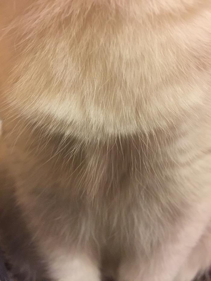 Тесла кот