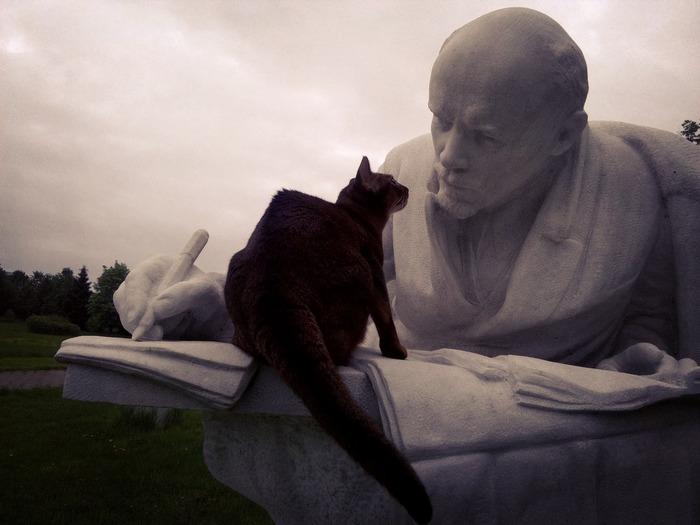 Кошку нюхает