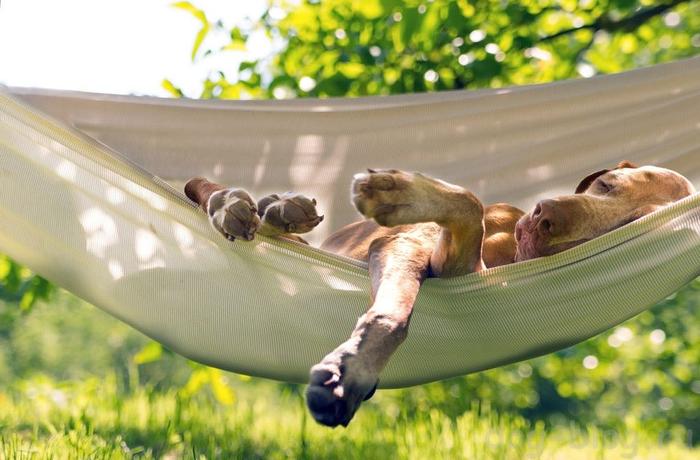 Мечты об отпуске... Собака, Гамак, Здоровый сон, Мечты об отпуске