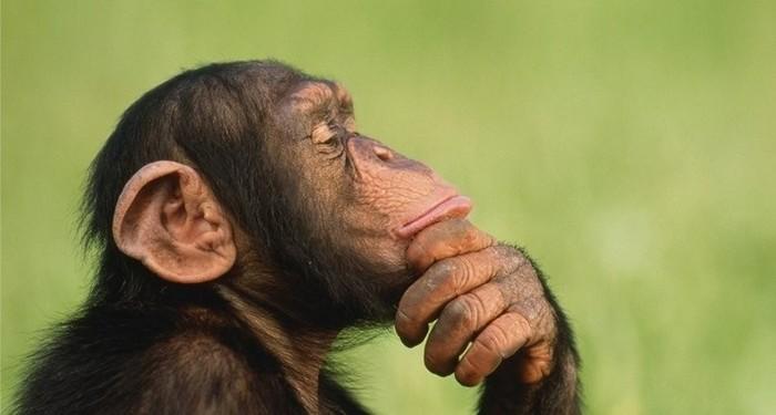 Видео с шимпанзе, освоившим инстаграм, поразило интернет-пользователей Общество, Животные, Шимпанзе, Социальные сети, Instagram, Московский комсомолец, Интернет, Видео