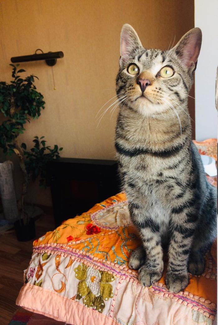 Делюсь радостью (до и после). Кот, До и после, Помощь животным, Волонтеры, Кошачий мир, Длиннопост