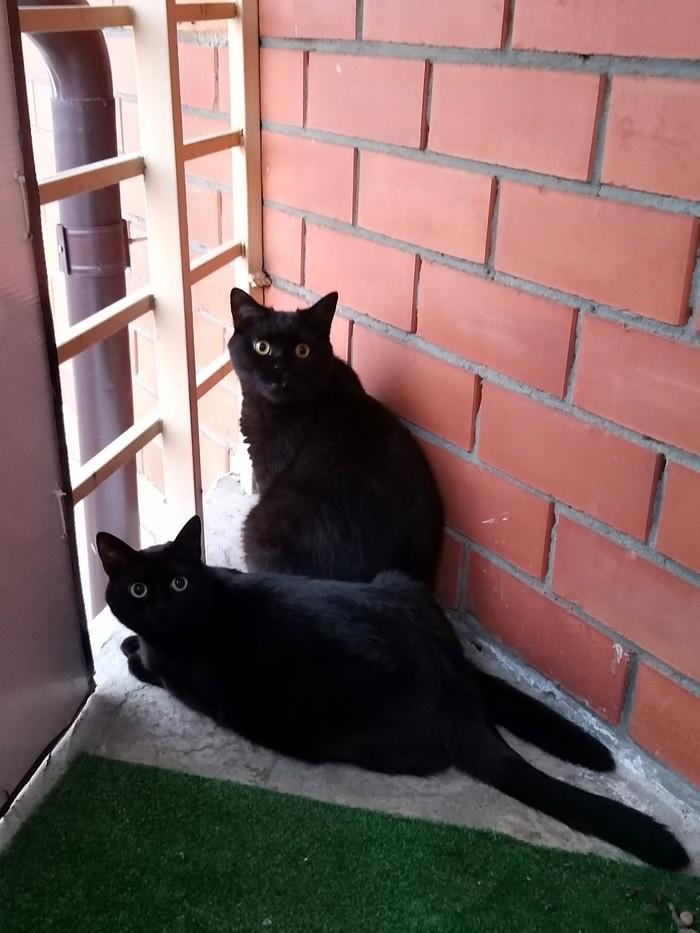 Котаны Кот, Фотография, Домашние животные