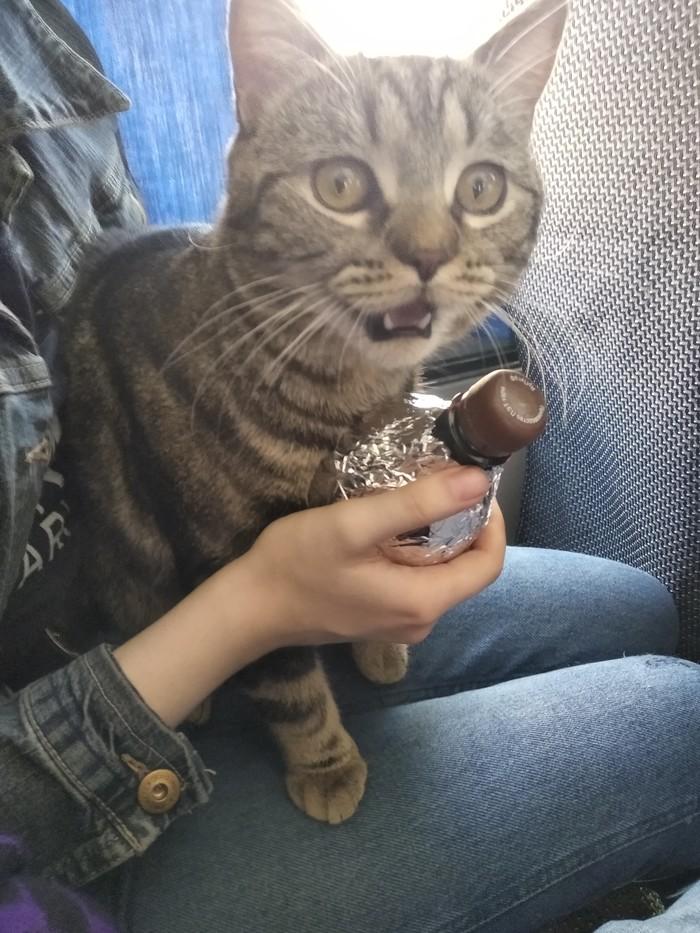 Кот на бутылке Кот, Дорога, Жаркое, Лето, Это не Лето, Бутылка