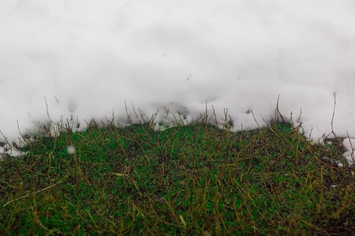 Снова снег и подготовка к Пасхе. Фотография, Камера, Пасха, Снег, Весна, Животные, Зима, Алтай, Длиннопост