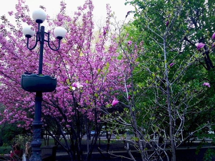 Весна, красота и Донецк Донецк, Фотография, Весна, Длиннопост