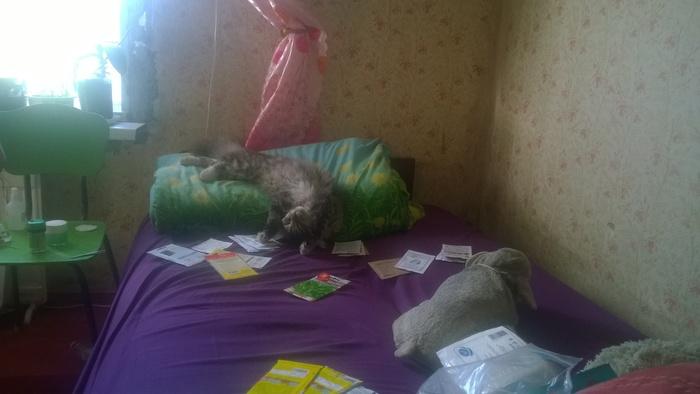 Дайте поспать... Кот, Котомафия, Лень, Недосып, Хозяин, Длиннопост