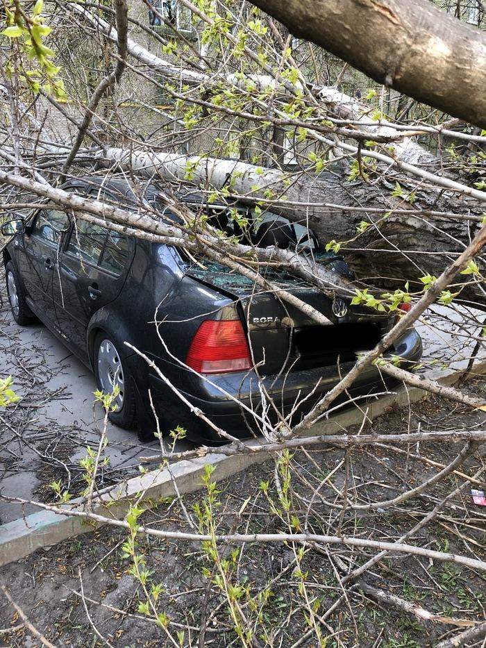 Не повезло Авто, Дерево, Коммунальщики, Длиннопост