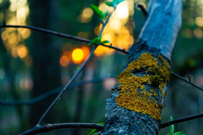 Вечерняя прогулка в лесу Фотография, Nikon, Начинающий фотограф, Критика, Lightroom