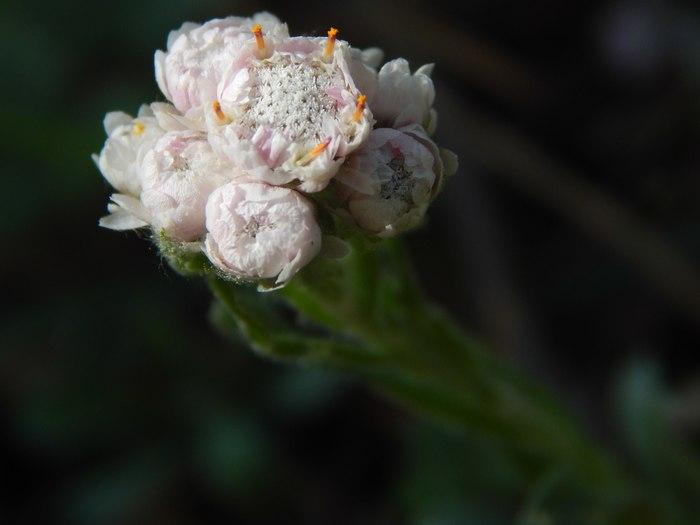 Природы творенье Макро, Цветы, Начинающий фотограф