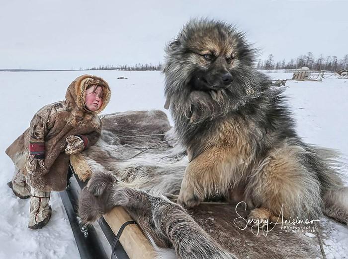 Эх, прокачу Фотография, Животные, Собака, Север, Дети