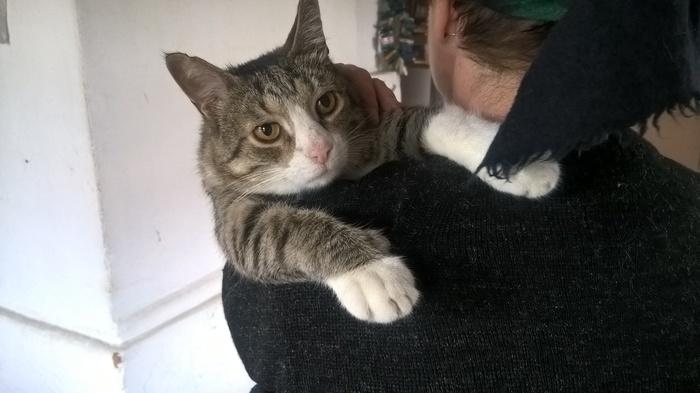На руках спокойнее Кот, Хорошо в деревне