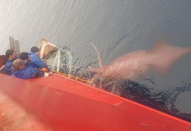 """""""Моя подруга сделала это фото с рыбацкой лодки, на которой она работает в Антарктиде"""""""