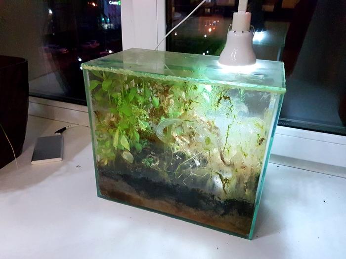 Экосистема замкнутая - Байкал #10 Замкнутая экосистема, Байкал, Природа, Эксперимент, Наблюдение, Экосистема, Экосистема в аквариуме, Растения, Длиннопост