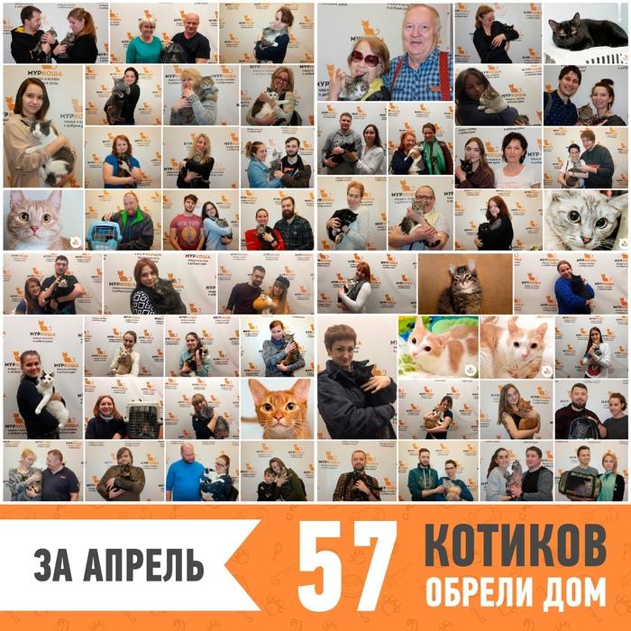 """В апреле 57 котиков из приюта """"Муркоша"""" обрели дом! Муркоша, Приют муркоша, Длиннопост, Помощь животным, Кот"""