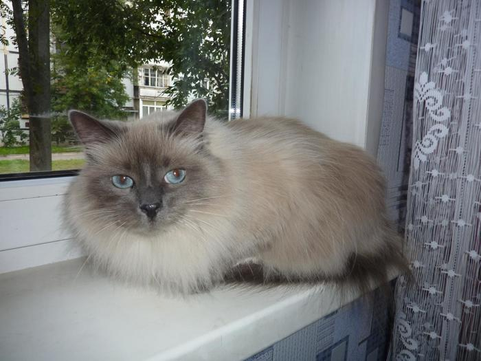 А кошку я вам не отдам! Кот, История одного спасения, Реальная история из жизни, Выброшенная кошка, Длиннопост