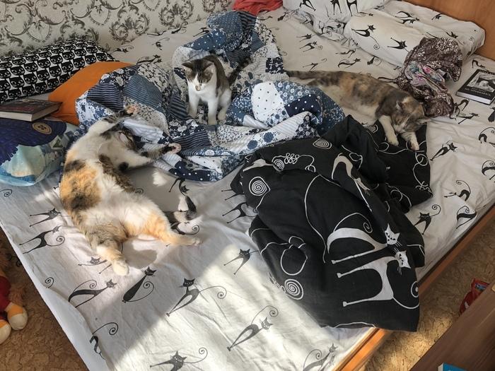 Кошки кровать