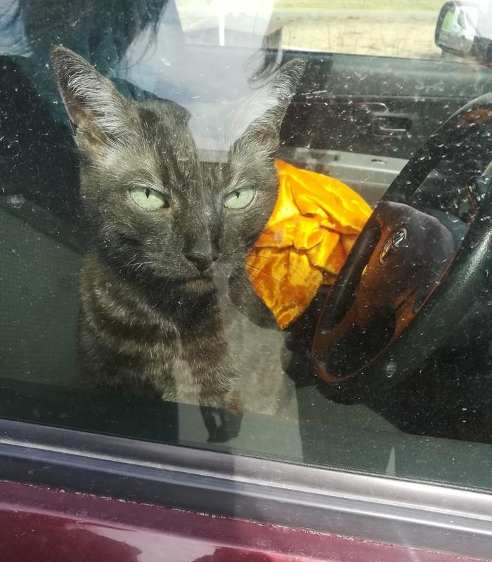 Везите уже на дачу, да поскорее Кот, Фото на тапок
