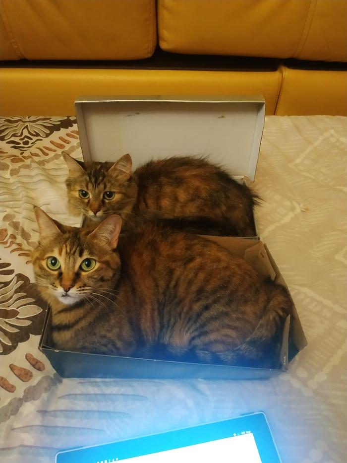 Порядок? Легко! Кот, Коробка, Обувь, Длиннопост, Коробка и кот, Ловушка для кота